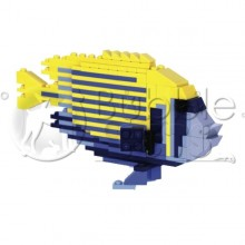 Small Emperor Angelfish - Poisson ange empereur