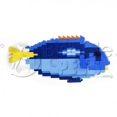 Lego - Regal Tang - Paracanthurus hepatus - Chirurgien bleu