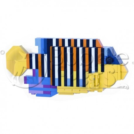 Lego - Regal Angelfish - Pygoplites diacanthus - Poisson Ange Duc