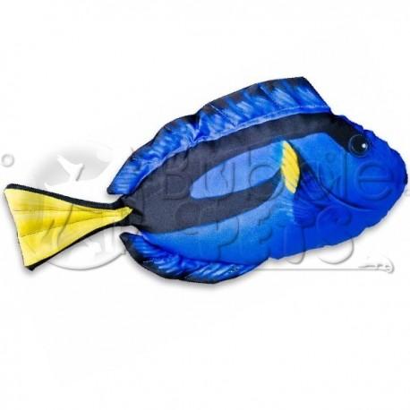Coussin Chirurgien Bleu - Paracanthurus Hepatus